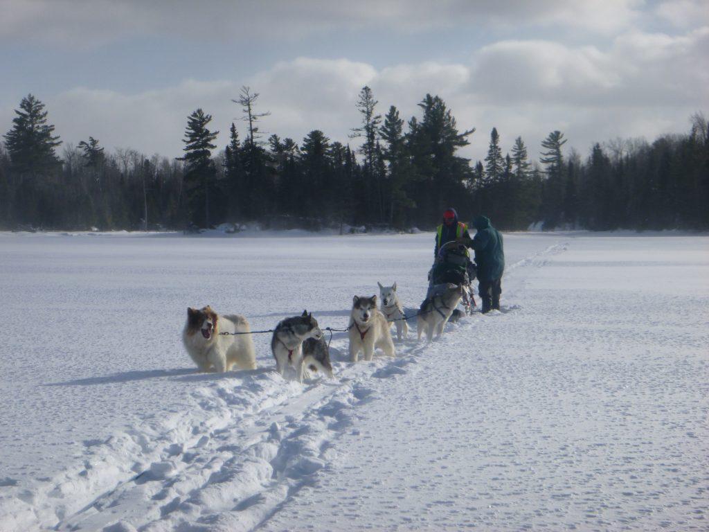 VOBS Dog Sledding Adventure
